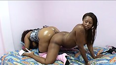 Oiled up black babes with big booties take good care of each other
