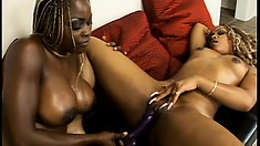 Two busty ebony babes with their hot bodies all oiled up eat out each other's cunts